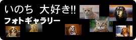 ますみ犬猫病院フォトギャラリー:いのち大好き