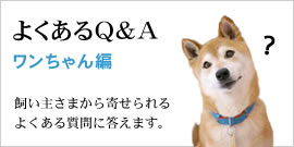 qa_dog